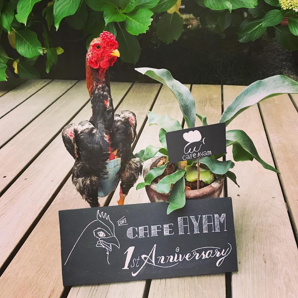 Cafe Ayam 一周年